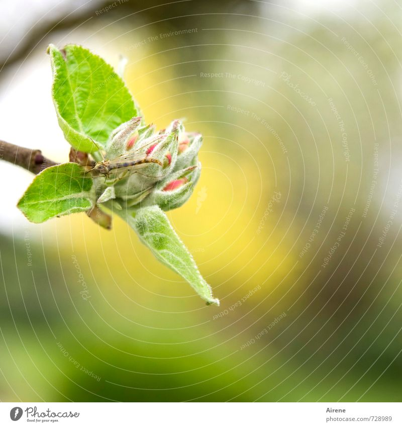 Green Plant Tree Leaf Animal Yellow Spring Blossom Garden Flying Blossoming Insect Fragrance Bud To feed Crawl