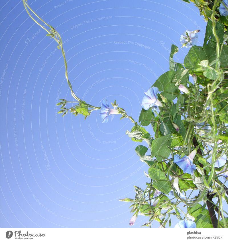 Nature Beautiful Sky Flower Green Blue Plant Summer Leaf Autumn Blossom Garden Wind Horizon Violet Climbing