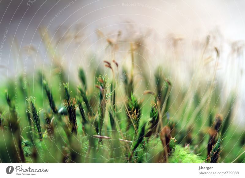 green stuff Environment Nature Plant Spring Summer Grass Wild plant Brown Green Moss Carpet of moss Botany Colour photo Subdued colour Exterior shot Close-up