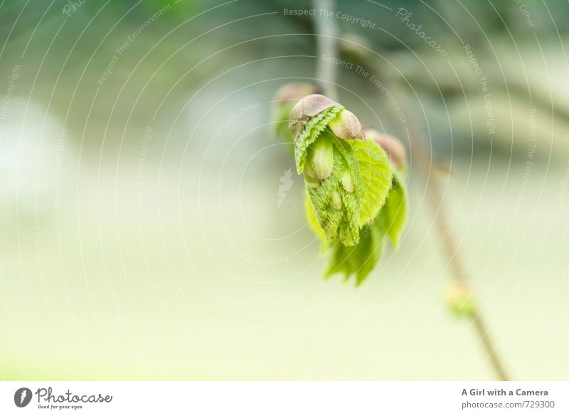AST 7 - I'm new here Environment Nature Plant Spring Tree Leaf Bud Garden Park Forest Growth Fresh Uniqueness Natural Green Deploy Bursting Light green Delicate