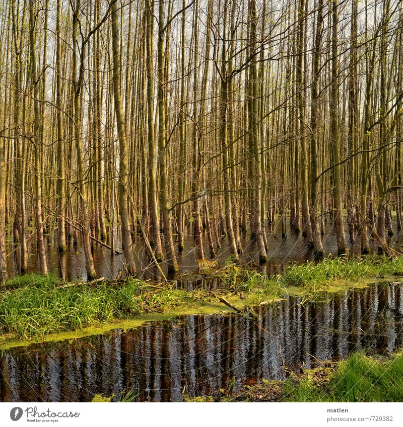 micado Nature Landscape Plant Water Spring Beautiful weather Tree Grass Meadow Forest Bog Marsh Deserted Gray Green Arrangement Deluge Parallel Colour photo