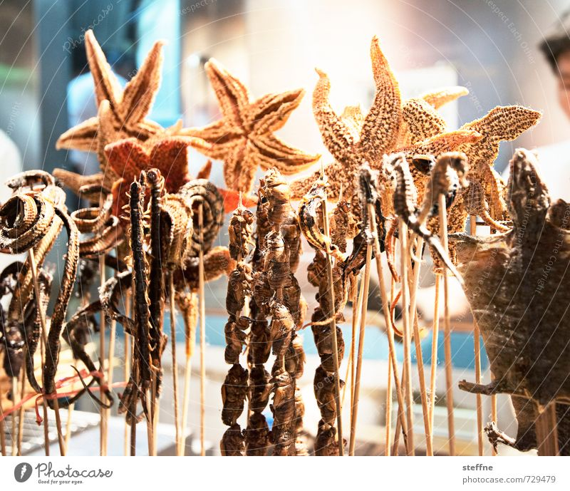 They eat it in China ... Food Nutrition Asian Food Authentic Exceptional Disgust Delicious Crazy Starfish Scorpion Impaled Seahorse Snake habit of eating