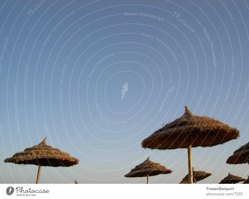 Parasol mushrooms? Tunisia Sunshade Straw Vacation & Travel Thought Leisure and hobbies Sunbathing Munich Blue sky Free Looking Sky Fog Dusk