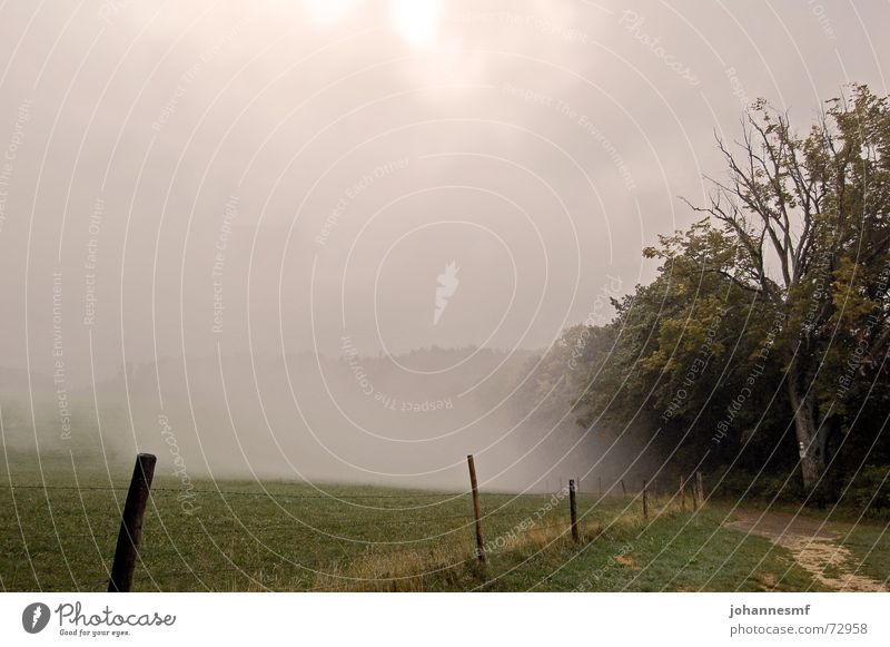 fog hole Swabian Jura Fog Fence Meadow Exterior shot Tree Mystic Jinxed Sky sootstone Lanes & trails Signs and labeling