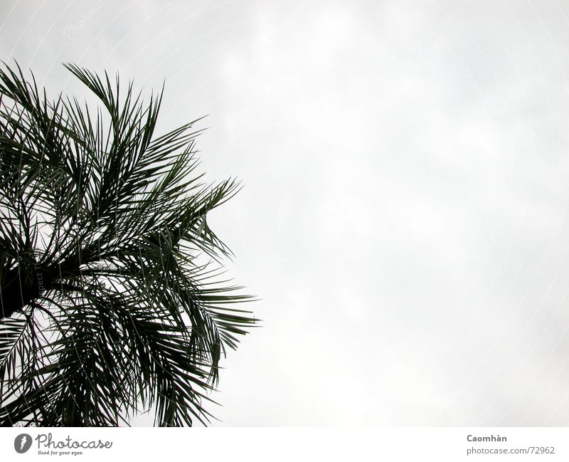 Sky Vacation & Travel Beautiful Plant Ocean Beach Freedom Sand Flying Virgin forest Palm tree