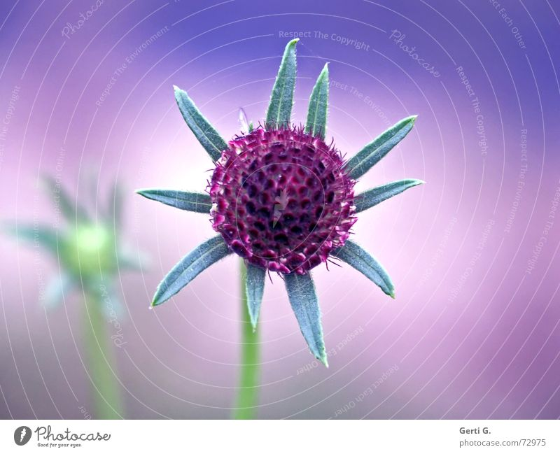 °dream°dream°dream° Dream Gorgeous Violet Lilac Flower Plant Multicoloured Green Stalk Autumn Soft Delicate Illusion from the dream dreams are foams dreaming