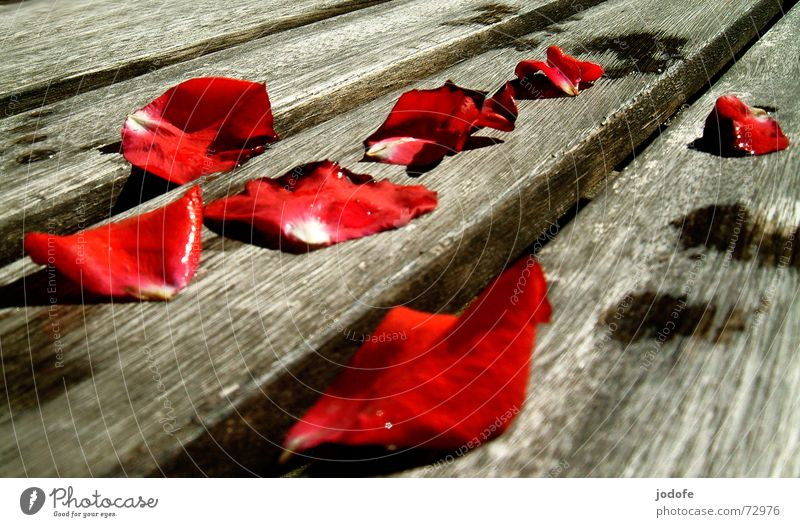 Water Red Plant Summer Flower Black Autumn Death Gray Wood Brown Wet Drops of water Romance Rose Bench