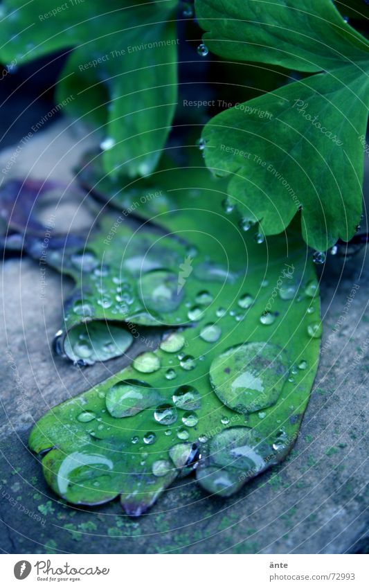 Nature Water Plant Calm Leaf Life Spring Garden Rain Drops of water Wet Fresh New Cool (slang) Soft Damp