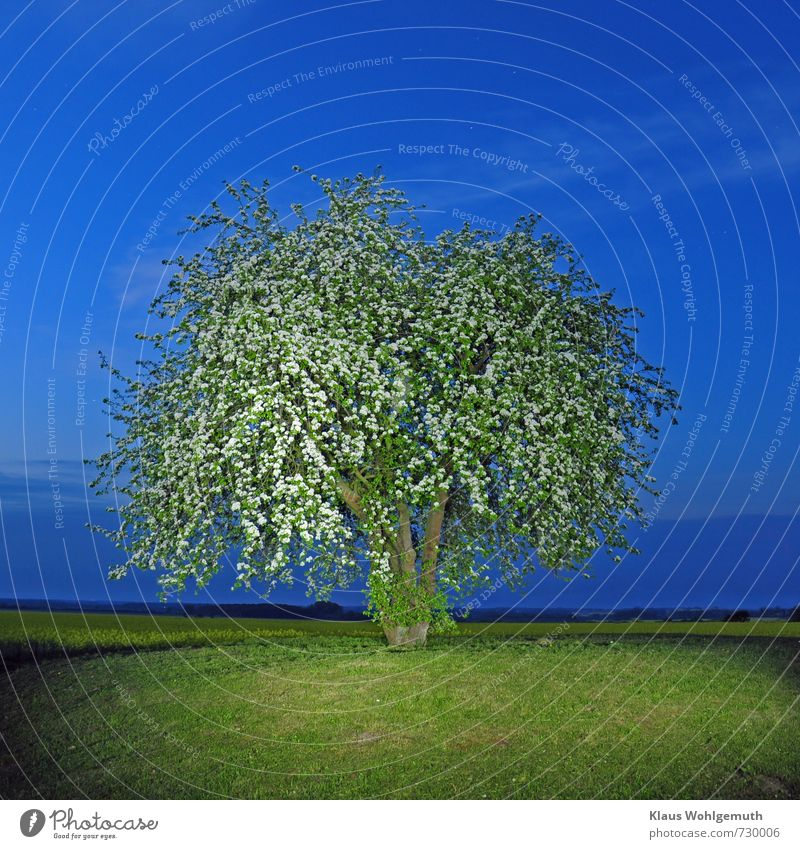 At night on the Mühlenberg 3 Relaxation Calm Cloudless sky Night sky Stars Horizon Spring Beautiful weather Plant Tree Agricultural crop Pear tree Canola