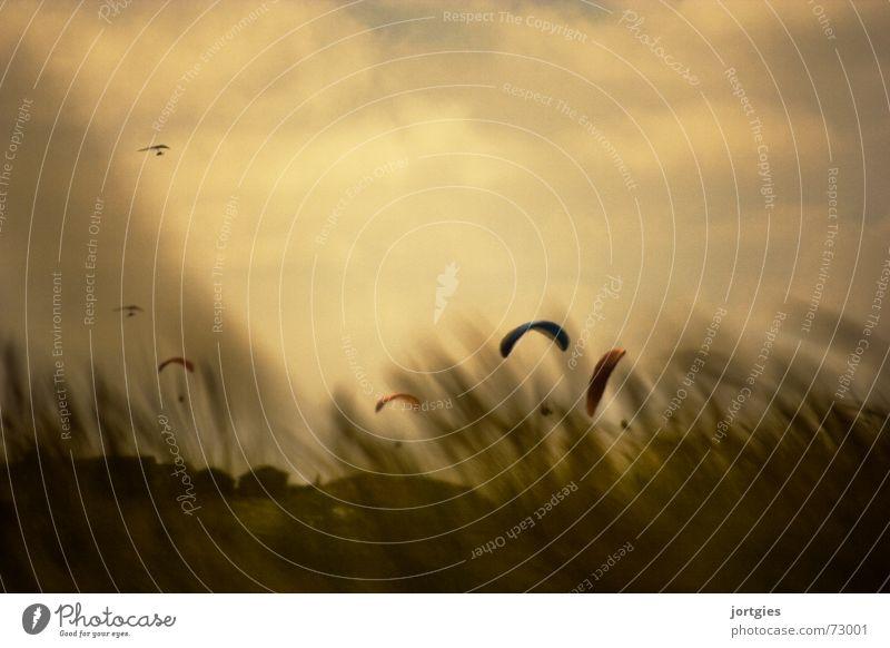 Sky Sun Ocean Summer Joy Beach Sports Air Coast Wind Flying Aviation Gale Parachute Kite Paraglider