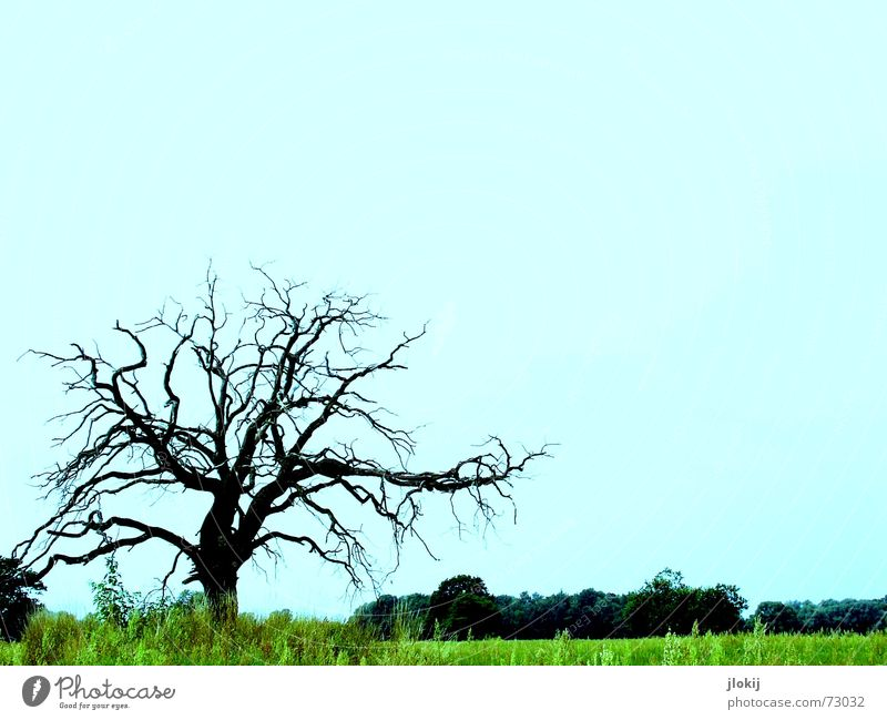 lonely Tree Rich pasture Green Loneliness Grass Growth Large Strong Plant Nature Live Life Beautiful Transience Blue paint screw Contrast alone Branch