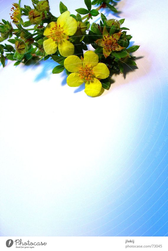 Nature Blue Green Beautiful Plant Yellow Autumn Blossom Lie Bushes Decoration Soft Delicate Friendliness Blossoming Faded