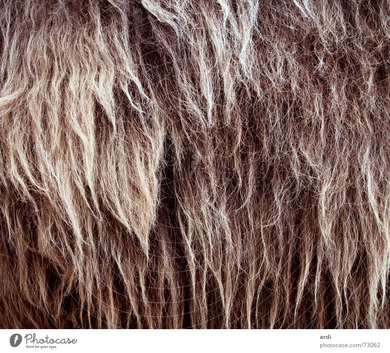 rasta Wool Animal Physics Cuddly Shaggy hair Fat Hair and hairstyles Pelt Dreadlocks Warmth snug cuddly fuzz shag Structures and shapes coat structure ardi Lush