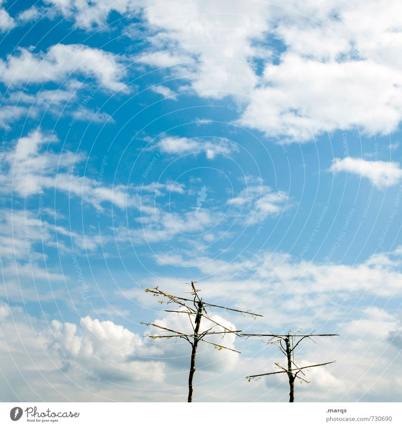 Sky Nature Blue Beautiful Summer Tree Relaxation Clouds Environment Spring Trip Beautiful weather Elements Uniqueness Attachment Bleak