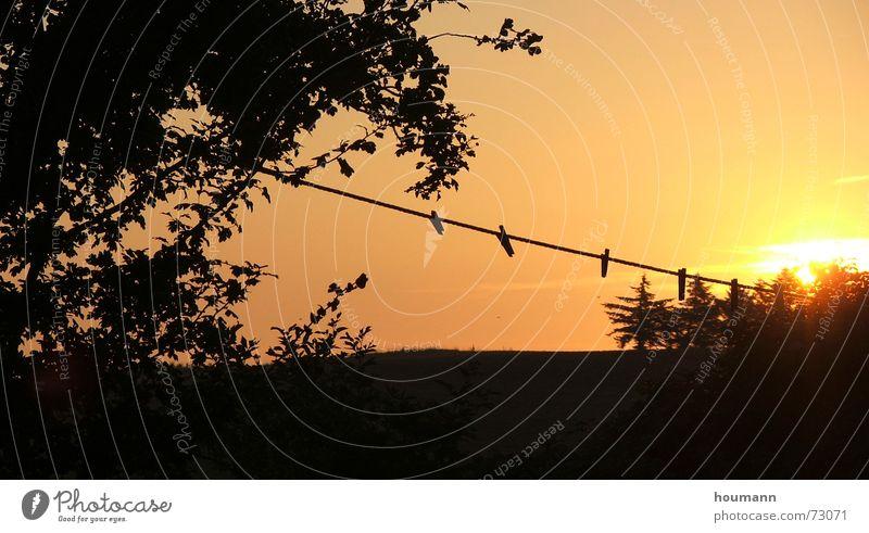Tree Sun Warmth Orange Rope Physics Clothes peg