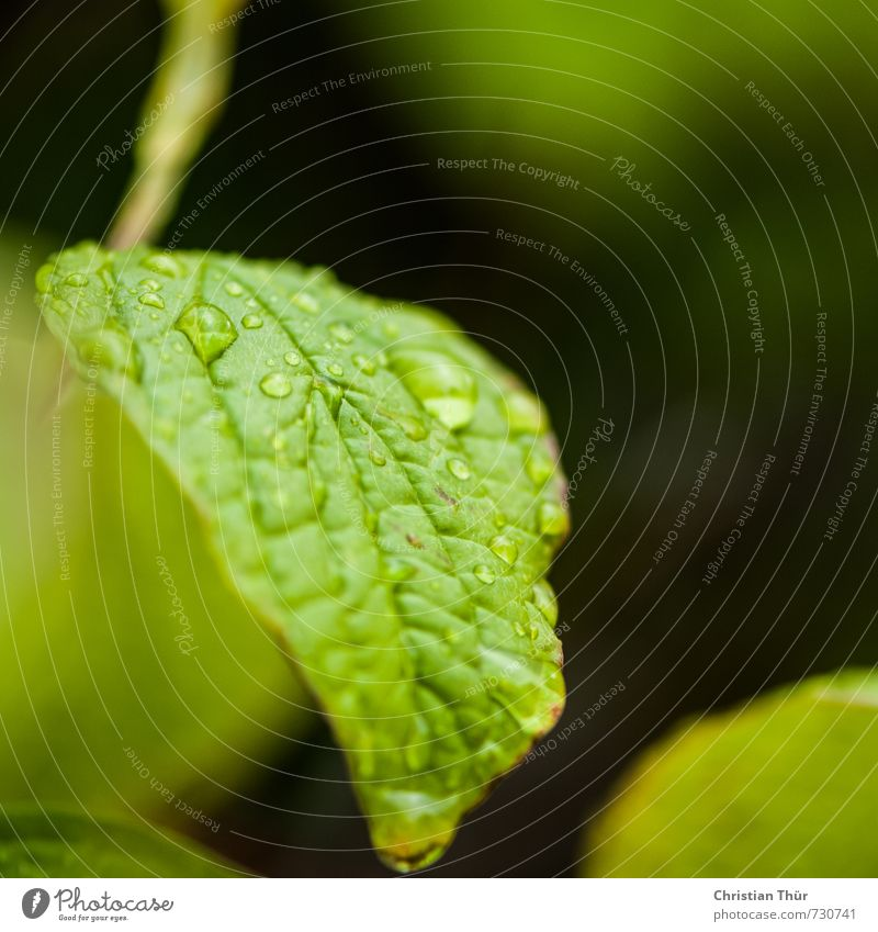 Nature Green Plant Leaf Black Environment Emotions Spring Moody Dream Rain Contentment Illuminate Esthetic Wet Drops of water
