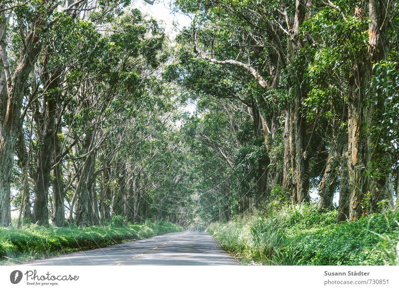 Nature Tree Beautiful weather Uniqueness Tunnel Avenue Hawaii Tunnel vision Kauai