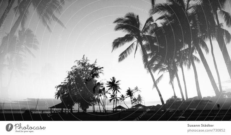 hawaii, ick dream about you. Tree Virgin forest Coast Ocean Esthetic Palm frond Palm beach Kauai Hawaii Double exposure Dream Beach Pacific Ocean