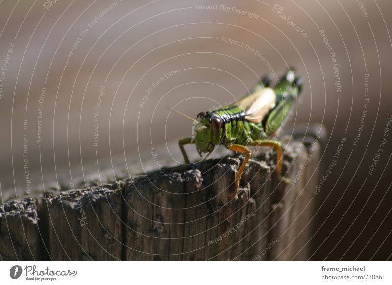 flip Jump Feeler Living thing Depth of field Stay Dolomites Erratic Calm Macro (Extreme close-up) Locust wooden pillars Threat Nature Wait karersee Observe