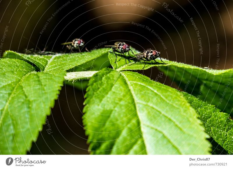 Nature Plant Animal Environment Small Fly Wait