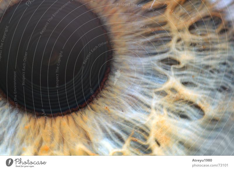 Eyes Glittering Snapshot Vessel Blind Pupil Objective Iris Macro (Extreme close-up)
