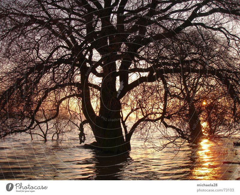 Standing firm against destruction Tree Lake Ocean Sunset Red Twilight Waves Reflection Black Go under Skeleton Delicate Cold Autumn Winter Unwavering Resist