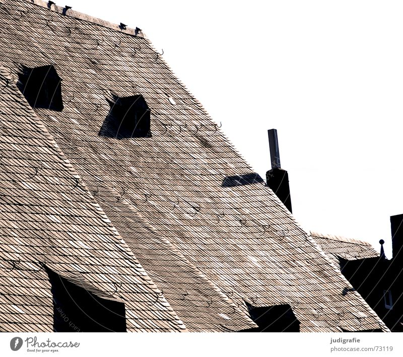 roof Roof Gable roof Roof ridge Cheek Gullet Cover Checkmark 4 Pigeon Bird Brick Roofing tile Calm Window Dormer House (Residential Structure) Old building