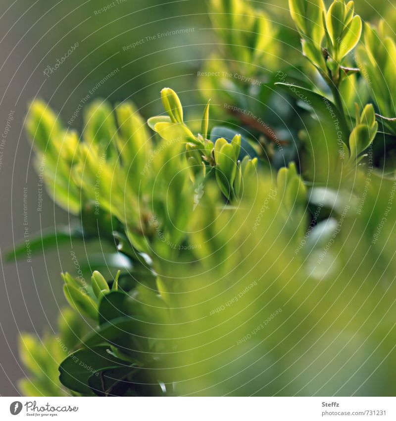 Nature Green Plant Leaf Spring Growth Bushes Foliage plant Hedge April Bright green Spring day Spring colours