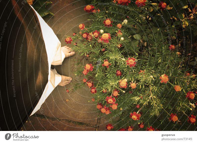Flower Garden Feet Stand Wild animal Shabby Stay Feral