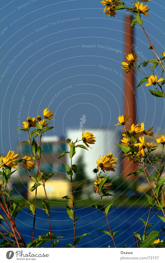 Industry through the flower Flower Blossom Yellow Blur Depth of field Plant Water Industrial Photography Sky