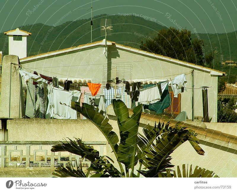 Summer Orange Large Leisure and hobbies Services Spain Palm tree Laundry Majorca Underpants South Clothesline Mediterranean Men's underpants Washing day
