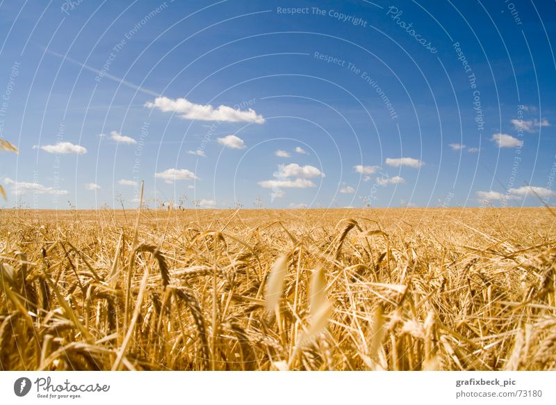 idyllic field Field Calm Vigor Nutrition Clouds Summer Physics Straw Ear of corn Thanksgiving Relaxation Exterior shot Landscape Food Idyll Warmth Blue Gold
