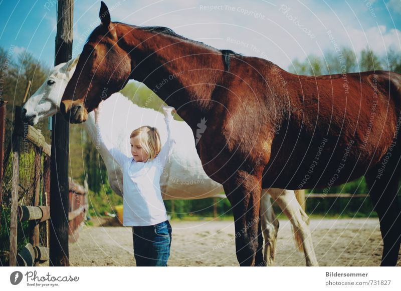 aiming high Vacation & Travel Trip Summer vacation Equestrian sports Human being Feminine Child Girl 1 3 - 8 years Infancy Animal Farm animal Horse 2 Touch