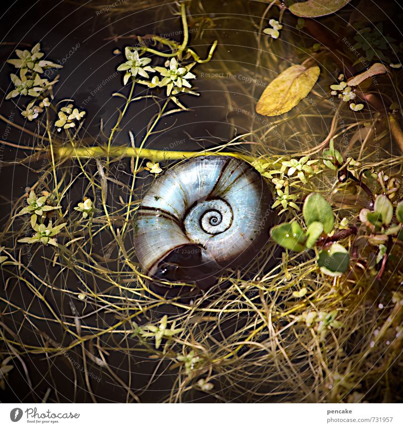 Mysterious beginning and end. Nature Elements Water Summer Plant Garden Pond Animal Snail Sign Emotions Infinity Snail shell Spiral Universe Photomicrograph