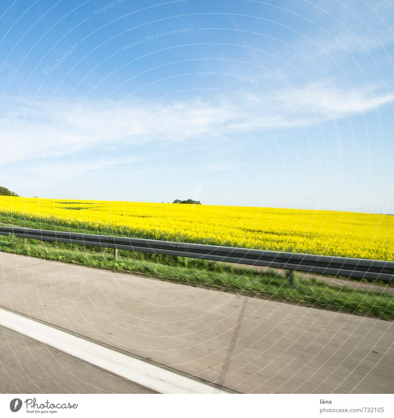 on the way Environment Nature Landscape Spring Beautiful weather Canola Field Transport Traffic infrastructure Motoring Street Lanes & trails Highway Movement