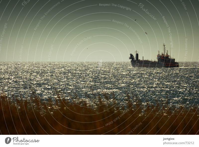 Ocean Beach Coast Watercraft North Sea Seagull Oil Oil pollution