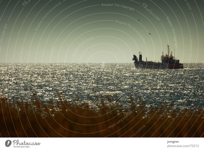 On an important mission Watercraft Ocean Coast North Sea Seagull Beach Oil Oil pollution oil removal