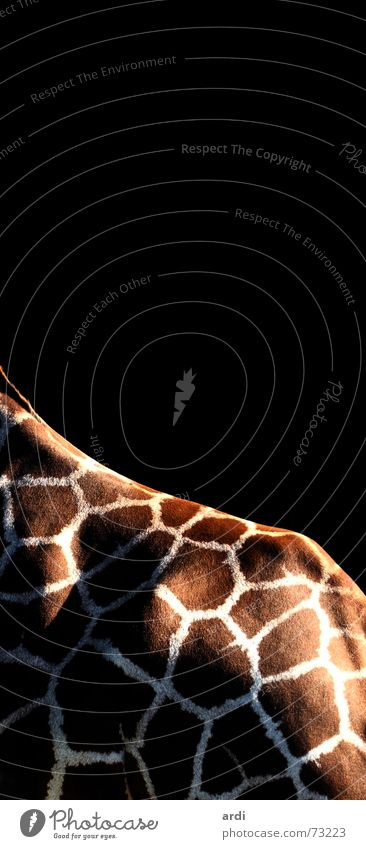 Animal Back Pelt Zoo Patch Giraffe Mosaic