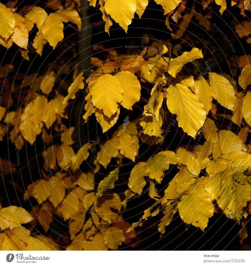 Nature Plant Tree Landscape Leaf Forest Yellow Environment Autumn Garden Park Gold Bushes Change Seasons Autumn leaves