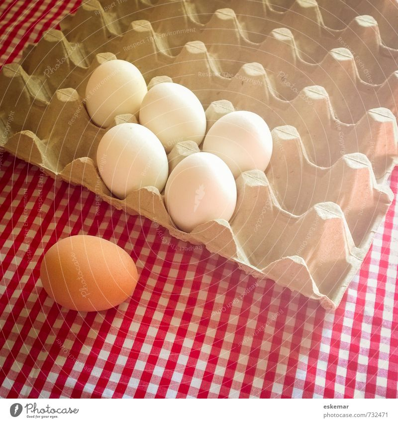 Egg individual Food Nutrition Organic produce Tablecloth Checkered Eggs cardboard Easter Esthetic Fresh Brown White Loneliness Uniqueness Equal Idea Identity