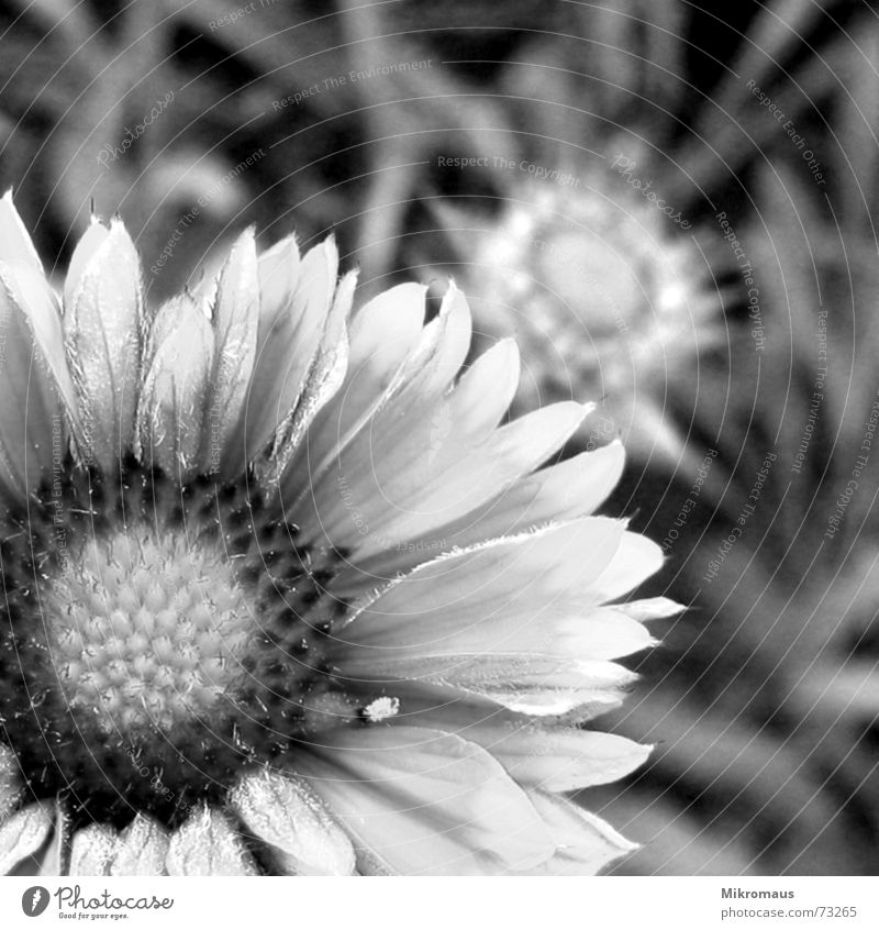 Green stuff in black and white Black & white photo White Flower Plant Foliage plant Meadow Garden Bouquet Summer Nature Blossom Stamen Pollen