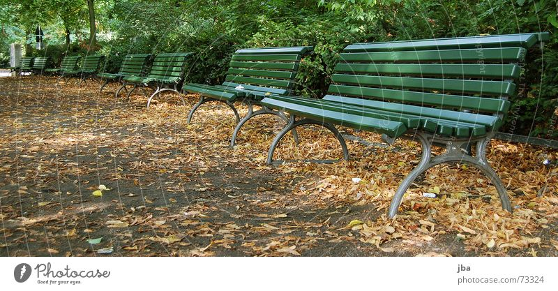 bank park Park Park bench Comfortable Uncomfortable Green Wooden board Iron Bushes Leaf Town Autumn Bench Sit