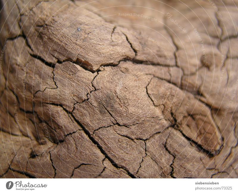 Simple structure Washed out Advanced Old Transform Brittle Mellow Crack & Rip & Tear Burl wood Dry Wood Transience Surface Background picture Foundations Tree