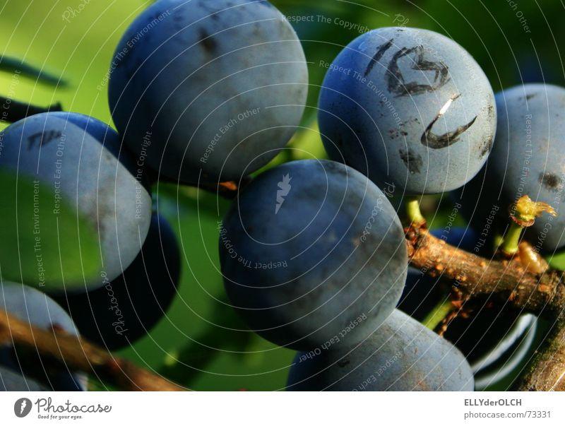 Love U Blackthorn Vitamin Healthy Autumn Relationship Declaration of love Longing Berries Blue Fruit Heart Nature second spring Summer
