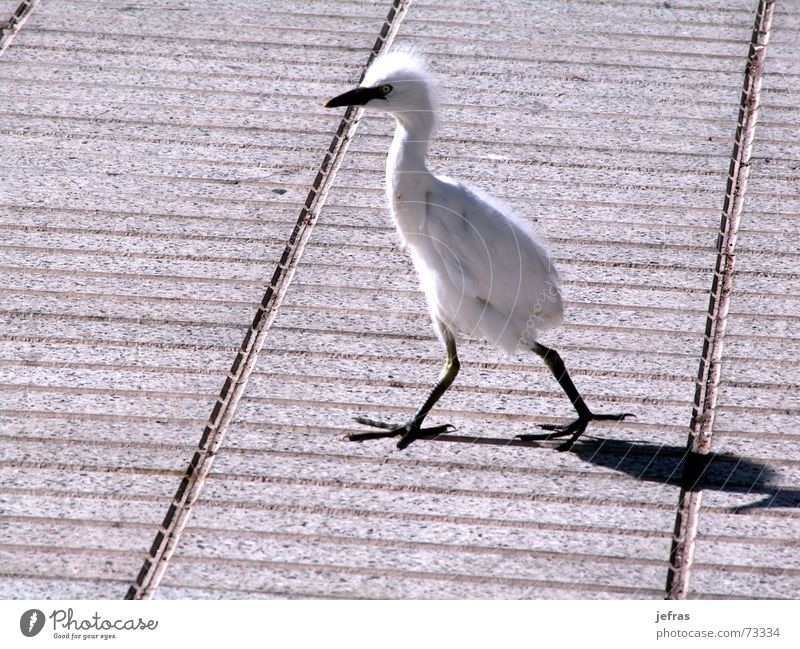 taking a walk Nature Animal animals birds walking isolated funny