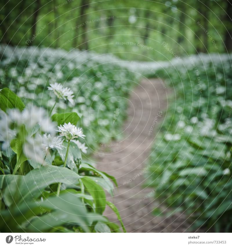forest odor Spring Plant Forest Lanes & trails Hiking Brown Green White Nature Growth Target Club moss Rich pasture forest Colour photo Exterior shot