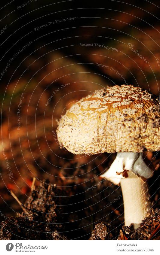 ...on one leg Autumn Search Woodground Baseball cap Leaf Mushroom Inedible Stalk Patch Earth