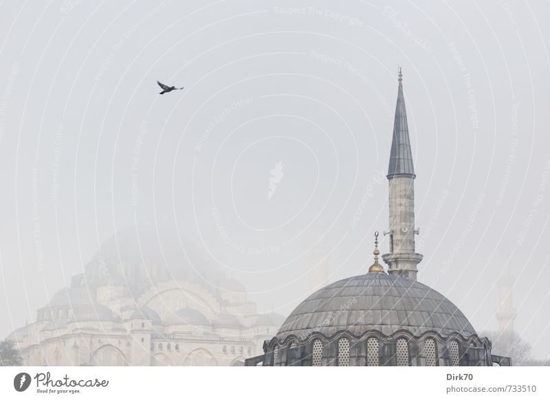 Süleymaniye in the fog Exotic Far-off places City trip Fog Istanbul Turkey Architecture Mosque Minaret Süleymaniye Mosque Wild animal Bird Pigeon 1 Animal Stone