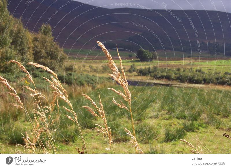 Scot_Ehren Scotland Ear of corn Autumn Wind Landscape Far-off places