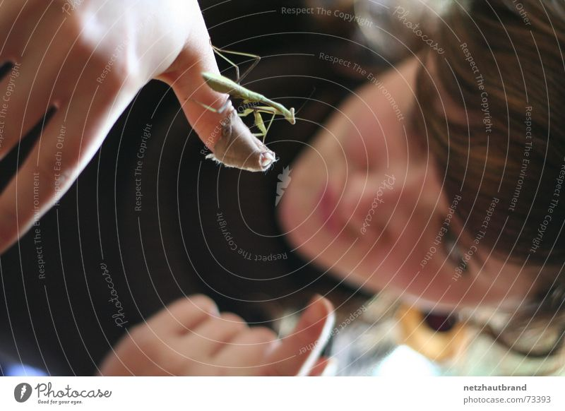 Watch it, kid! Adhesive plaster Woman Locust Praying mantis Animal Insect Hand Fingers Exclusion Forefinger Blur Wound